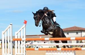 horse-721136_640